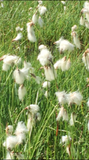 naturopathe sandra lacoste